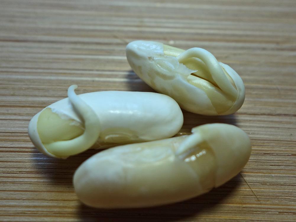 haricots blancs le soir fait il maigrir